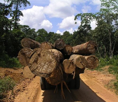 TPTI logging
